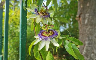 Arborescents, les «Hauts Potentiels» selon Floreven